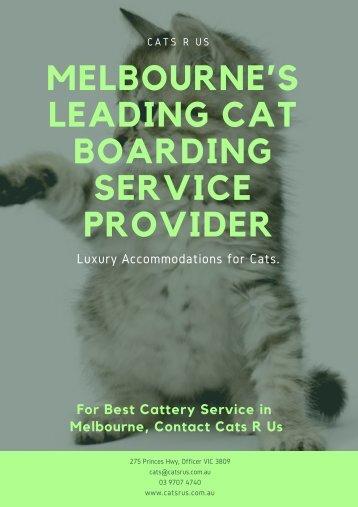 Melbourne's leading Cat Boarding Service Provider