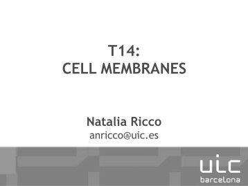 T14_CELLMEMBRANE