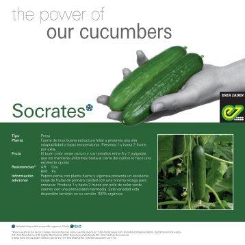 Pepinos Socrates