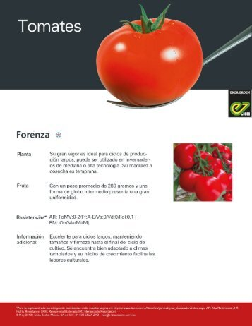 Tomate Forenza