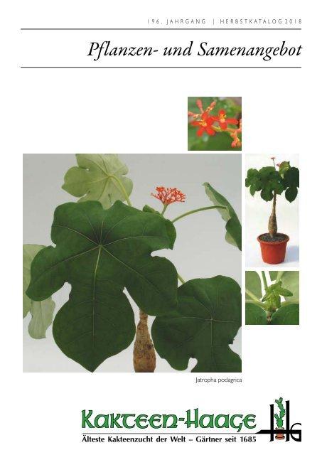 2er Satz Untersetzer Ø 16,2 cm Aged Terracotta rund Blumen Pflanzen Topf Ton