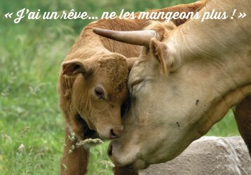 Carte Sentience Vache