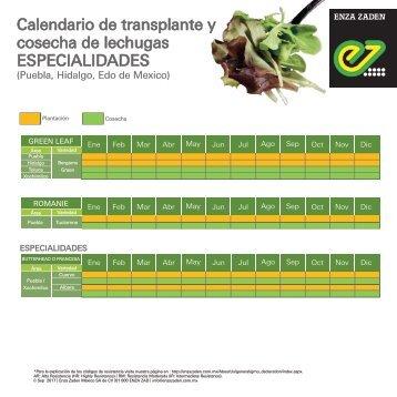 Calendario de Transplante y Cosecha de Lechugas