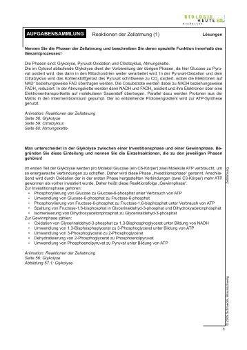 Arbeitsblatt 1: Lösungen - Reaktionen der Zellatmung (1)