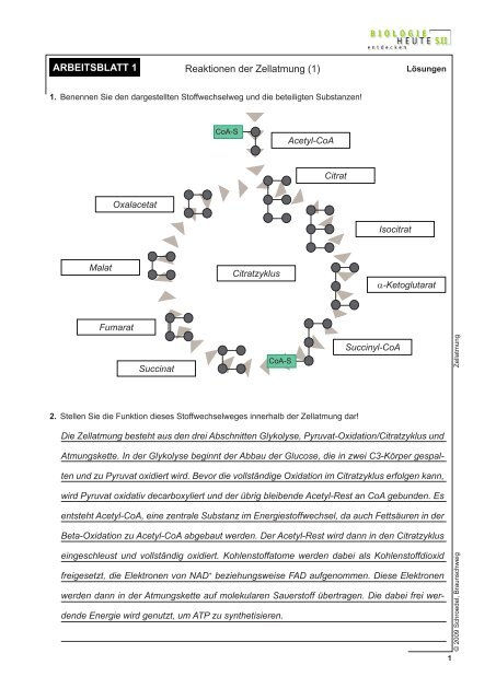 Arbeitsblatt 1 Lösungen Reaktionen Der Zellatmung 1
