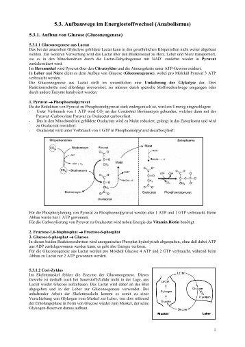 5.3. Aufbauwege im Energiestoffwechsel (Anabolismus) - Poenitz-Net