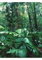 Región Amazónica - Page 3