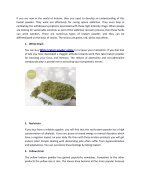 Obtain Beneficial Health Effects With Kratom Powder - Page 2