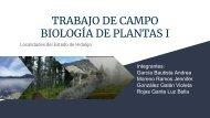 plantas-campo1