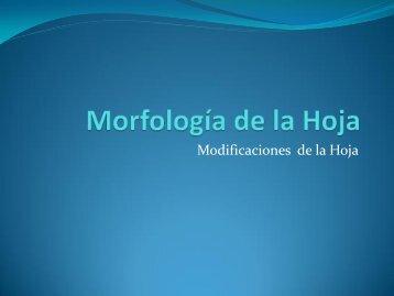 Morfología de la Hoja