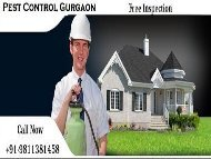 Pest control Gurgaon Dial +91- 9811381458-converted