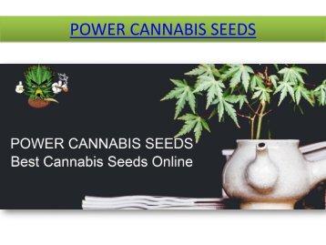 Barney's Farm Seeds   Marijuana Seeds   Best Cannabis Seeds Online