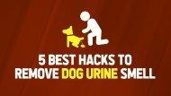 5 Best Hacks to Remove Dog Urine Smell