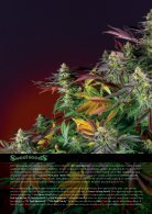 Sweet Seeds® 2019 - French - Page 2