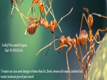 Pest control Gurgaon,Dial +91-9811381458-converted