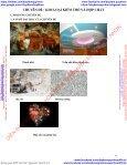 CHUYÊN ĐỀ ÔN THI THPT QG KIM LOẠI KIỀM THỔ VÀ HỢP CHẤT & CACBOHIĐRAT - Page 4