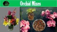 Best Orchid Mixes – Green Barn Orchid Supplies