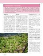 Cerezos en flor - Page 4