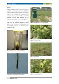 Integrated management of Helicoverpa armigera on different genotypes of Kabuli chickpea in Punjab, Pakistan - Page 4