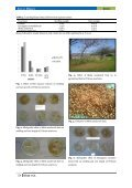 Allelopathic effect of some tree fruits on wheat (Triticum Aestivum L.) - Page 5