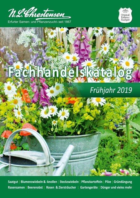 Kohlrabi /'Superschmelz/' weiß zart Riesenkohlrabi  bis 10kg schwer Samen 40411