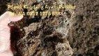 0812 1776 0588 (TSEL) | pupuk bawang - Page 5