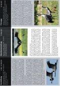 Vögel des Glücks - Page 2