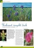 Bruten in der Röhre - NABU NRW - Seite 4