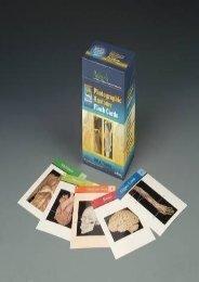 (BARGAIN) Rohen s Photographic Anatomy Flash Cards eBook PDF Download