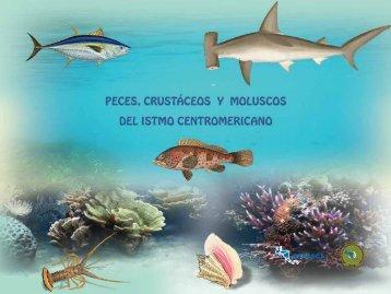 Catálogo de Peces