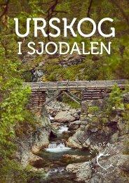 Urskog i Sjodalen