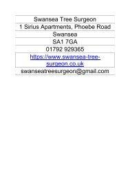Swansea Tree Surgeon