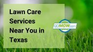 Get the best Professional lawn care near you in Texas