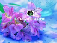 Best Clear orchid pot at low price