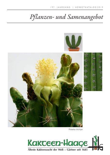 verschiedene große blühfähige Echinopsis Hybriden aus eigener Zucht im 7er Topf