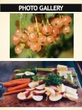 Fruit And Vegetable Suppliers For Restaurants | Call - 02 9746 6503 | harvestfresh.com.au - Page 7