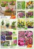 Floraland Hagebaumarkt KW 21 - Page 2