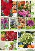 Floraland Hagebaumarkt KW 21 - Page 5