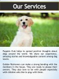 Golden Retriever Puppy| puppiesclub.com - Page 5