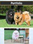 Golden Retriever Puppy| puppiesclub.com - Page 7