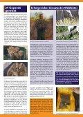Giraffen... sie verschwinden fast unbemerkt - Seite 3