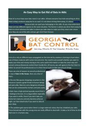 An Easy Way to Get Rid of Bats