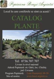 Catalog plante Pepiniera Brazi Argintii