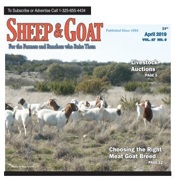 Sheep and Goat April 2019