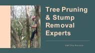 Tree Pruning & Stump Removal Experts - A&P Tree Services