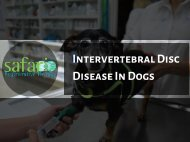 Intervertebral Disc Disease in Dogs - Stem Cell Safari