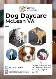 Dog Daycare Services in McLean VA