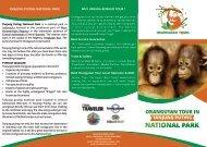 Orangutan Tour in Tanjung Puting