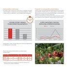 Leaflet_Pink tomato_Enroza_2019 - Page 4