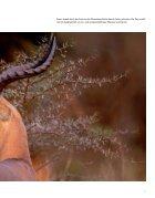 Safari SÜDAFRIKA - Seite 7